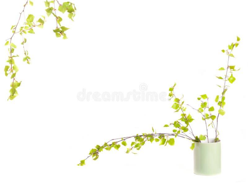 весна рамки стоковое фото