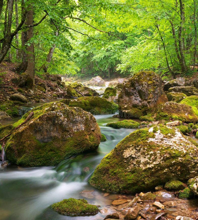 весна реки каньона стоковые изображения rf