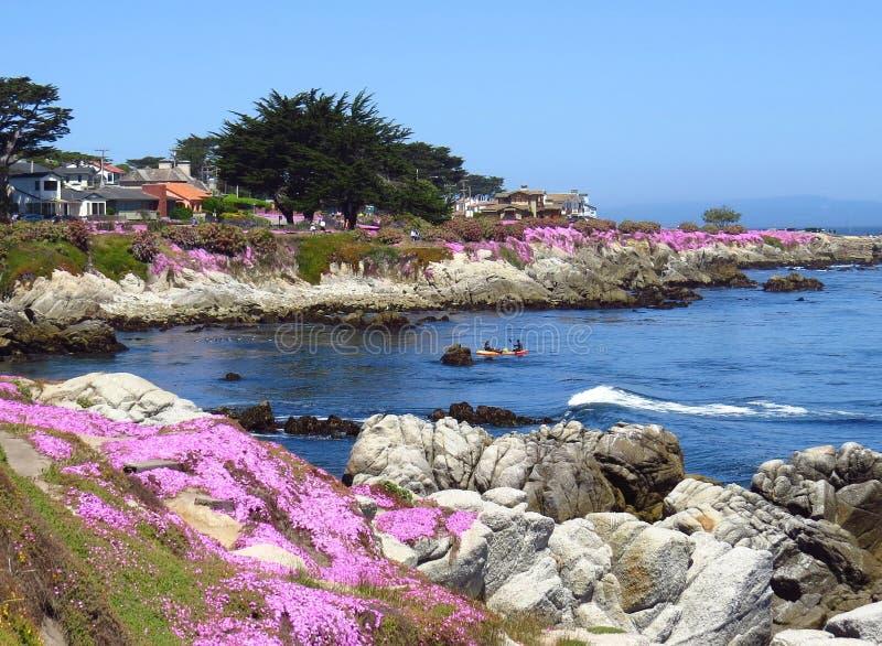 Весна Тихоокеанского побережья стоковое фото rf