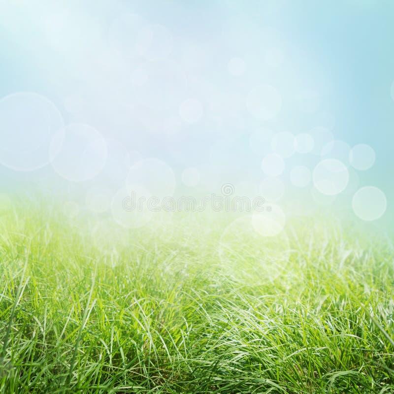 весна травы стоковое изображение