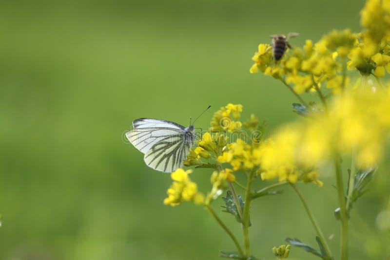 весна Украина природы одуванчиков крупного плана стоковая фотография