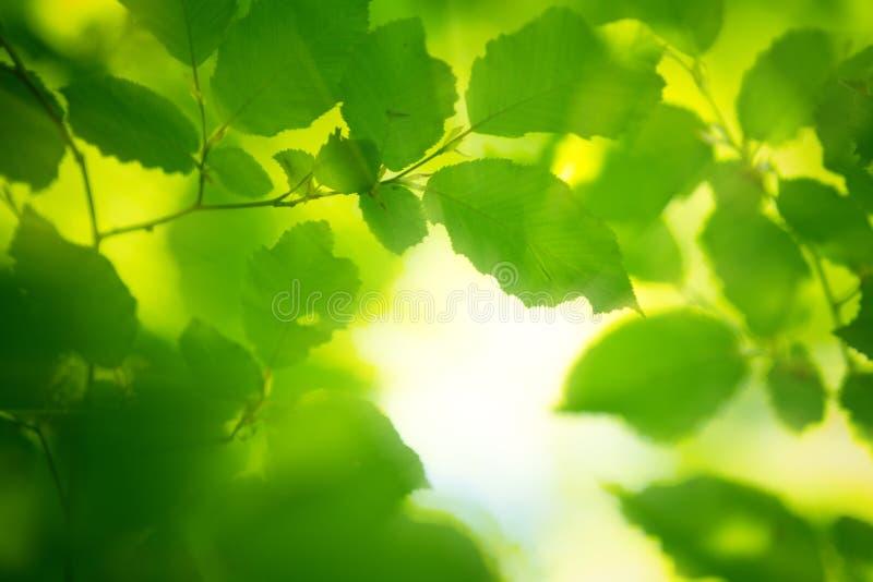 весна утра листьев светлая стоковое фото