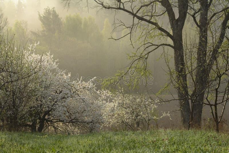 весна утра стоковые изображения rf