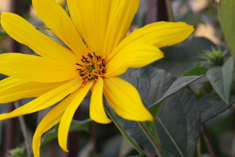 Весна фауны времени цветка красивая на переулке стоковое фото