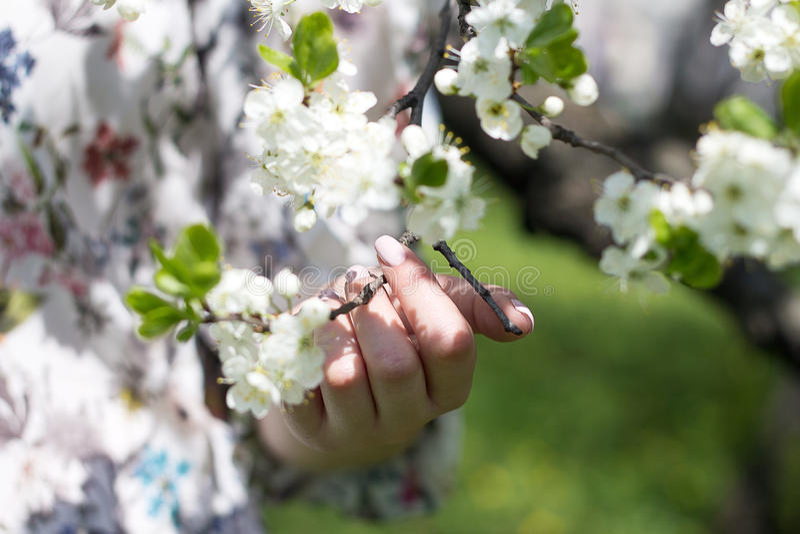 весна фото сада цветения яблока стоковая фотография
