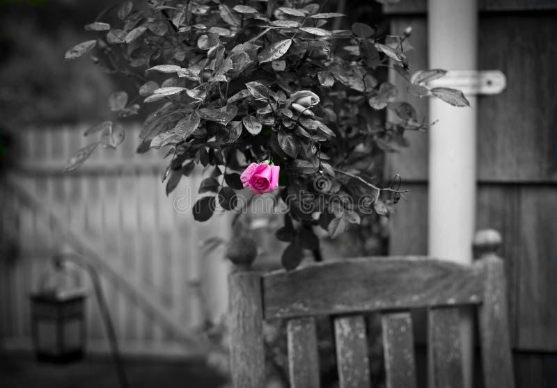 весна цвета