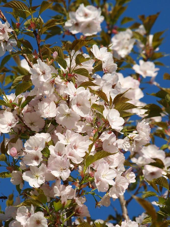 весна цветения стоковая фотография