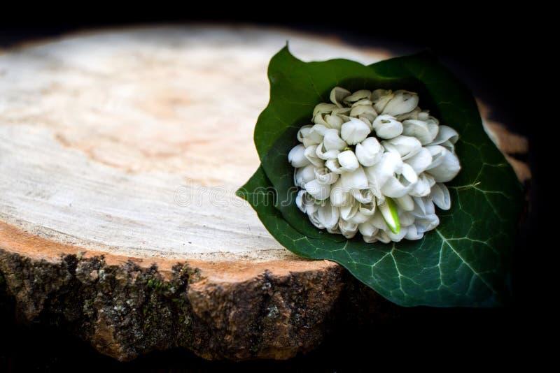 Весна цветет, день ` s женщин 8-ое марта snowdrops стоковое фото