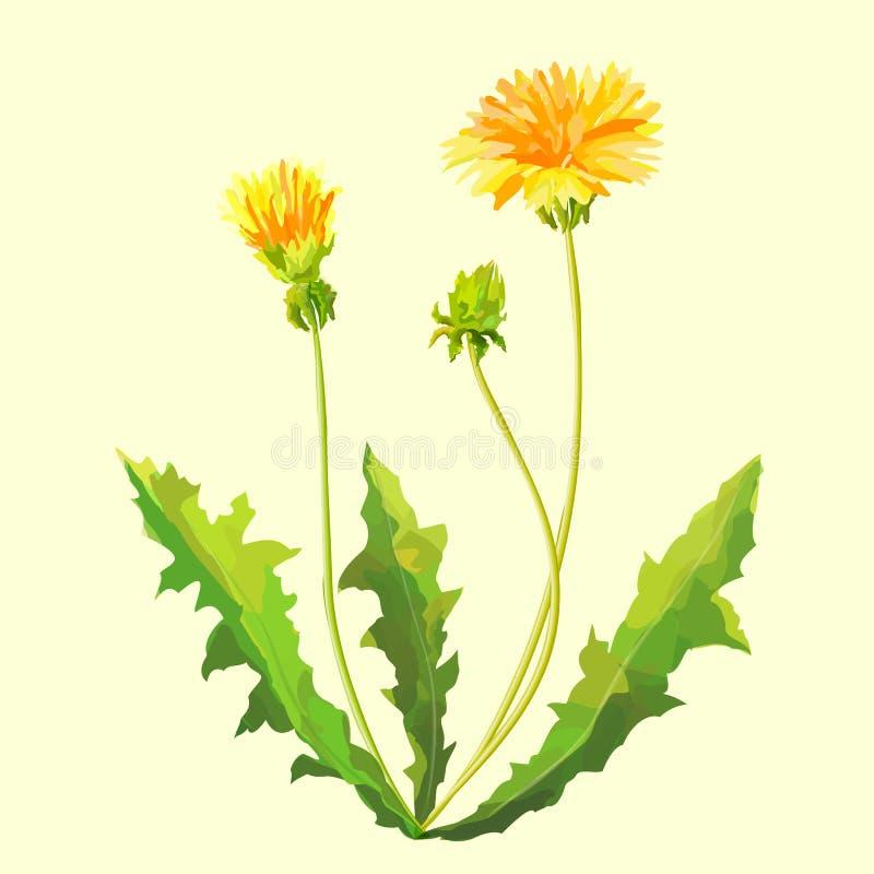Весна цветет одуванчики иллюстрация штока