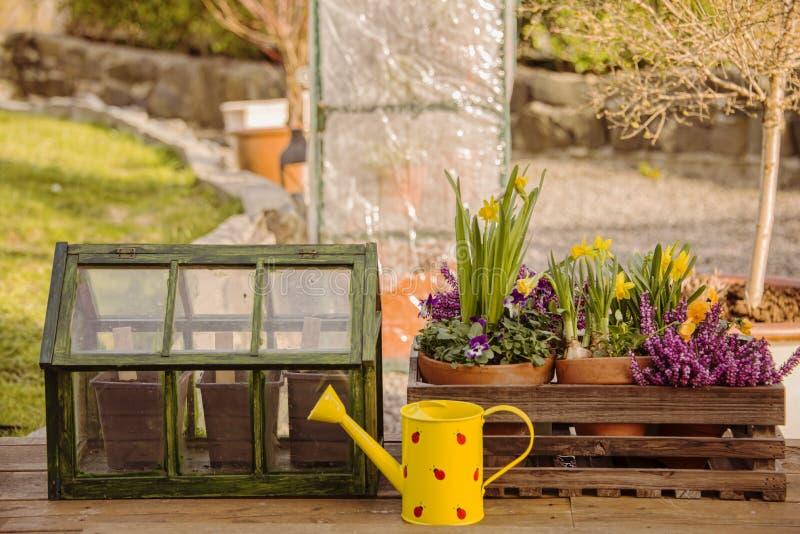 Весна цветет парник стоковое фото rf