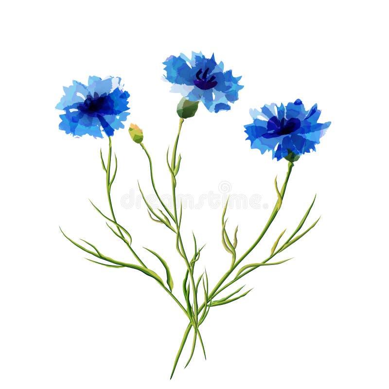 Весна цветет cornflower бесплатная иллюстрация
