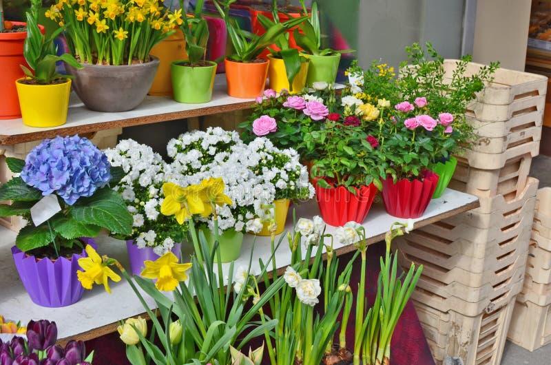 Весна цветет - narcissus и тюльпаны в баках на продаже в стоковая фотография