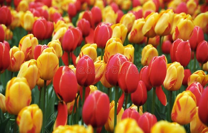 весна цветка предпосылки Стоковые Фото