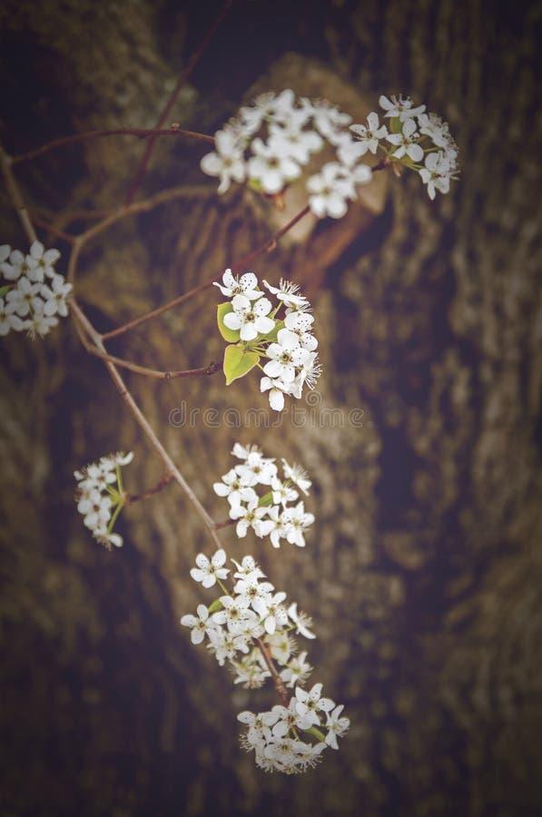 весна цветка dof конца цветения азалии отмелая вверх стоковое изображение rf