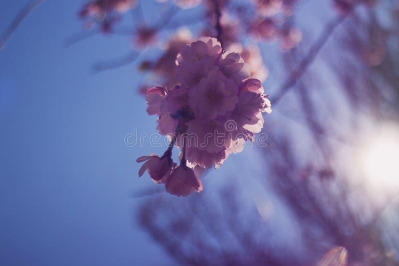 весна цветка dof конца цветения азалии отмелая вверх стоковые изображения rf