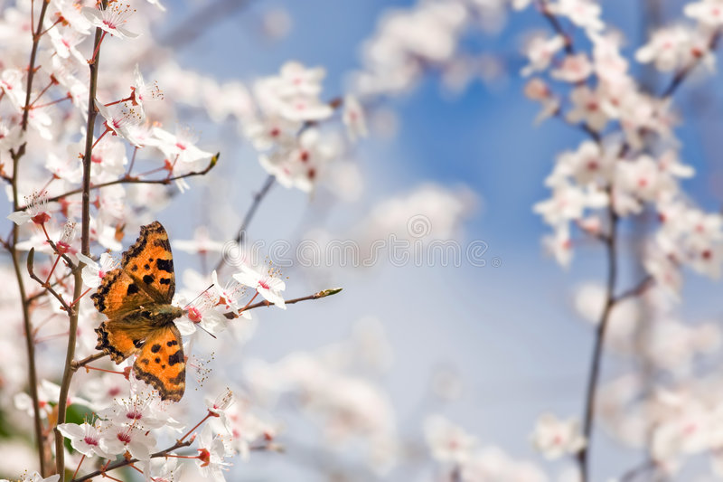весна цветков бабочки Стоковая Фотография RF