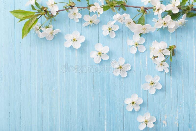 весна цветков предпосылки голубая стоковые фото