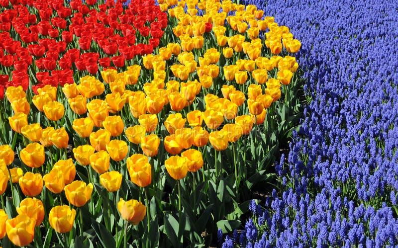 весна цветов стоковые фотографии rf