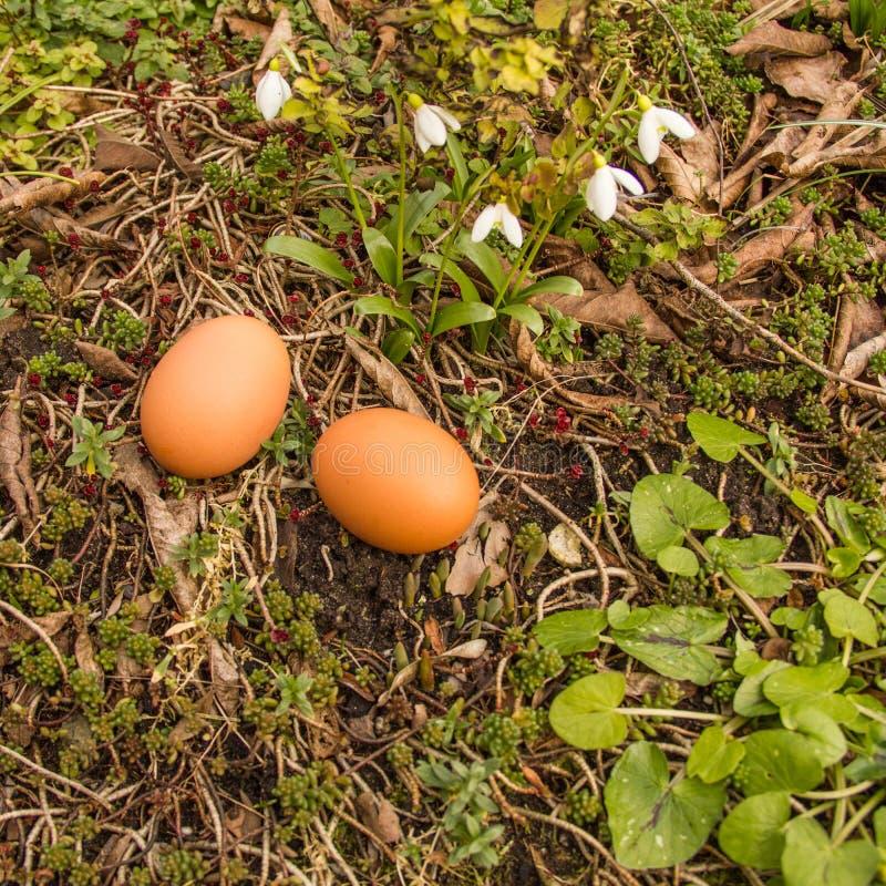 Весна, 2 яичка на том основании с заводами стоковые фотографии rf