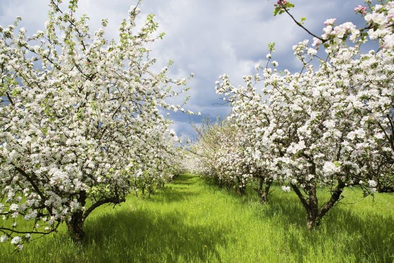 весна 2 садов стоковое изображение
