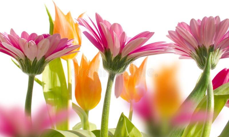 весна 3 садов стоковое изображение