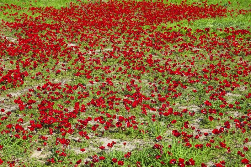 Download Весна стоковое фото. изображение насчитывающей изумлять - 37928424