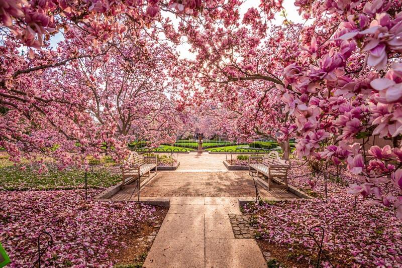 Весна DC Вашингтона стоковые изображения rf