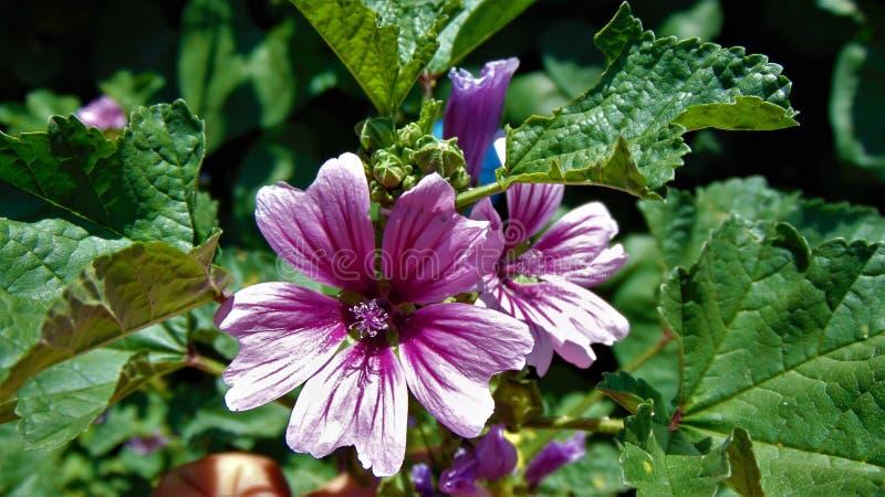Веснушка на цветке стоковые фотографии rf