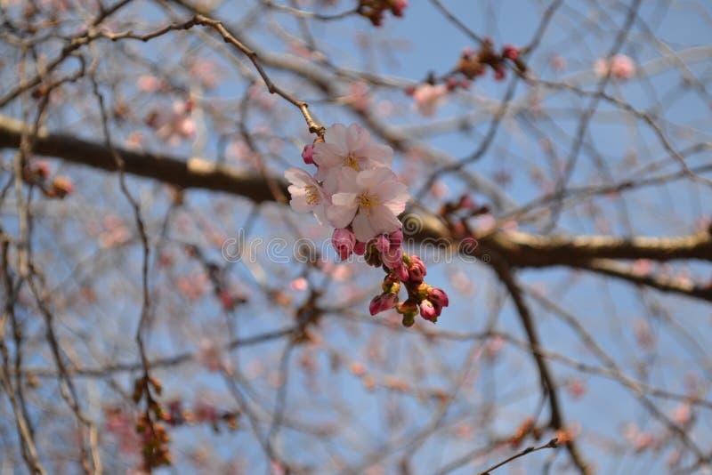 Весна здесь стоковые изображения rf