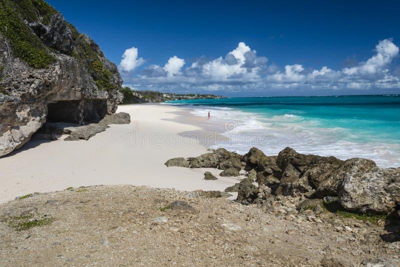 Вест-Индии Барбадос пляжа крана стоковые фотографии rf
