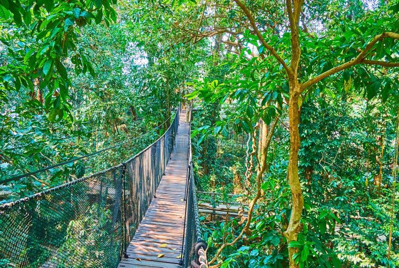 Весьма привлекательность прогулки дерева верхней, сада Градуса Фаренгейта Luang Mae, Doi Tung, Таиланда стоковая фотография