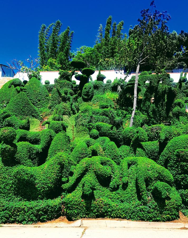 Весьма hedgecarving стоковые изображения