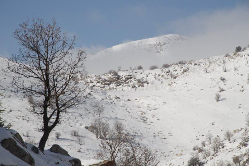 Весь белый снег на кабеле Mount Hermon очень красивом стоковое фото rf