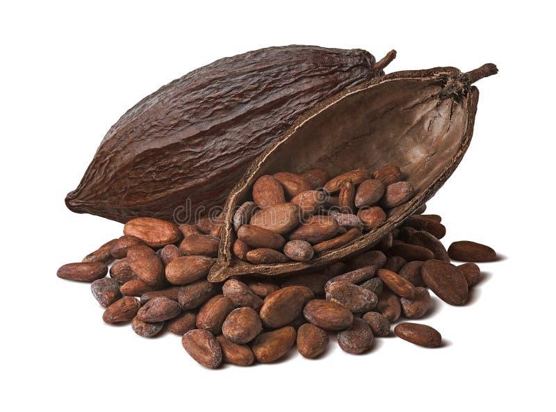 Весь и половинный стручок какао с сырцовыми фасолями изолированными на белой предпосылке стоковая фотография rf