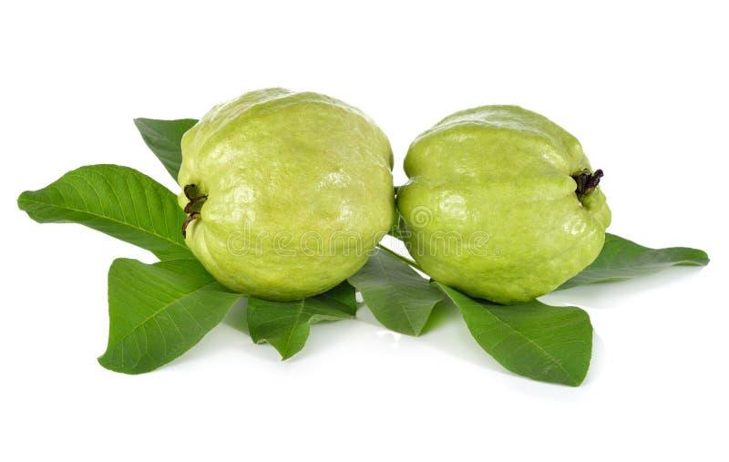 Весь свежий Guava с стержнем выходит на белизну стоковые изображения