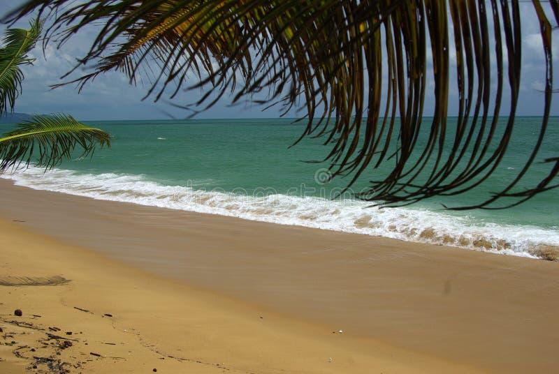 Ветви ладоней кокоса против ясного голубого неба стоковая фотография rf