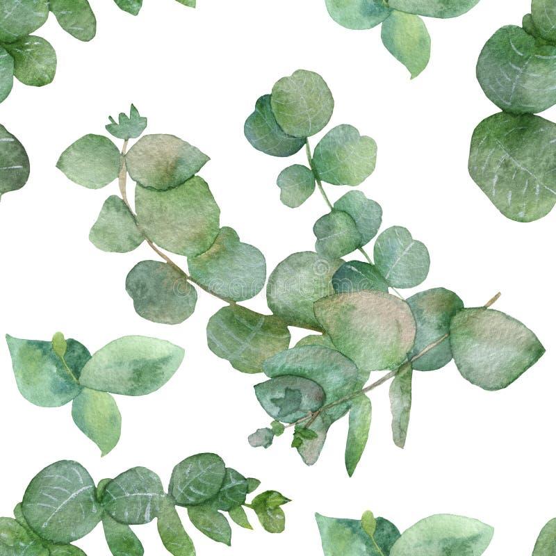 Ветви ботанической акварели безшовные картин-зеленые и листья целебного эвкалипта изолированные на белой предпосылке бесплатная иллюстрация