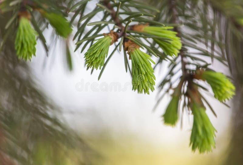 Ветви весны стоковые изображения