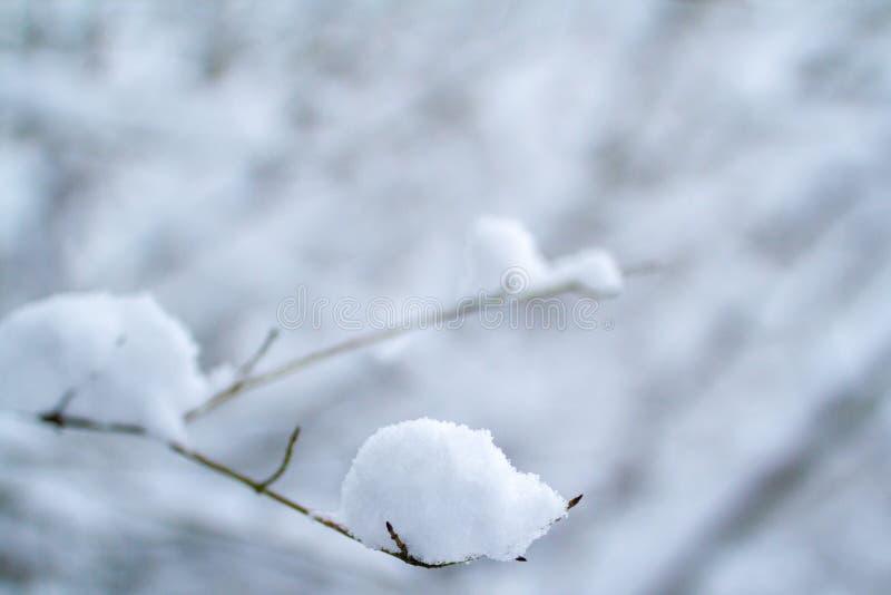 Ветви в снеге стоковая фотография