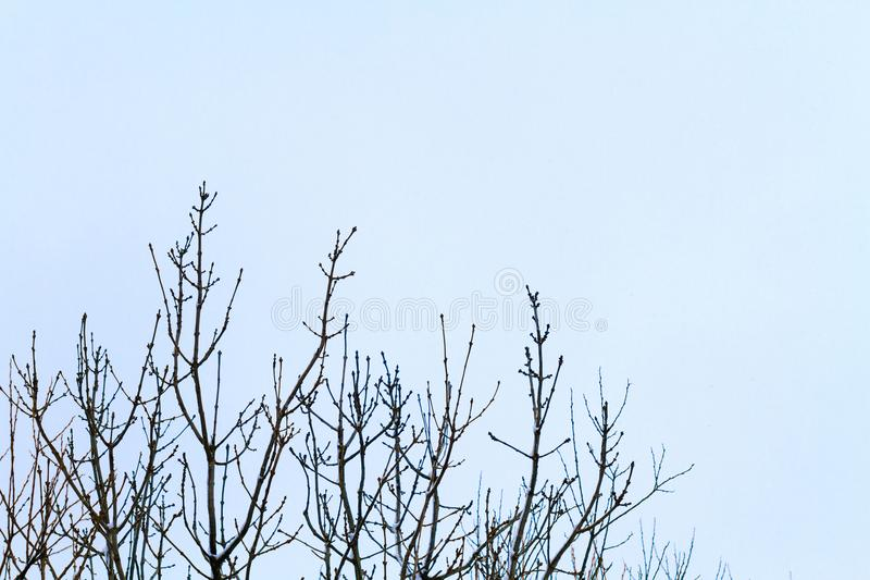 Ветви в снеге стоковые фото