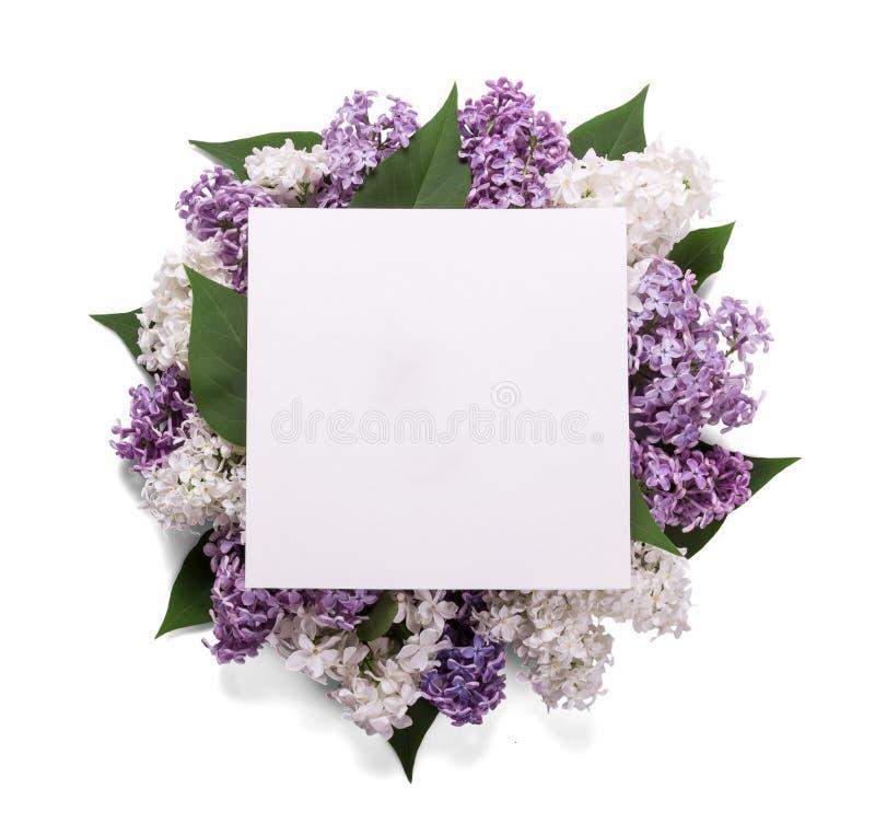 Ветви голубой и белой сирени клали в круг, na górze пустой изолированной поздравительной открытки, на белизну стоковые изображения rf