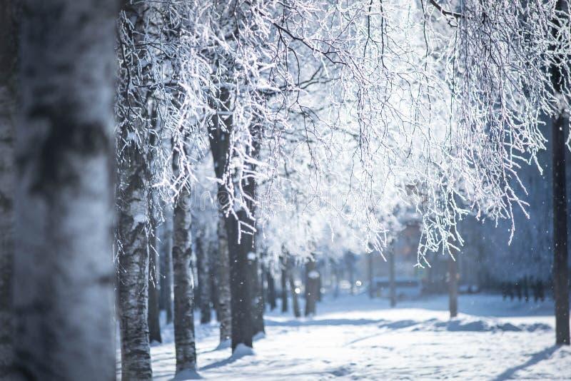 Ветви дерева в заморозке стоковые фотографии rf