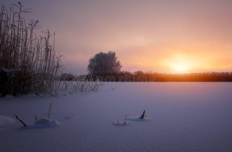 Ветви дерева и тростники покрыты с изморозью стоковые изображения
