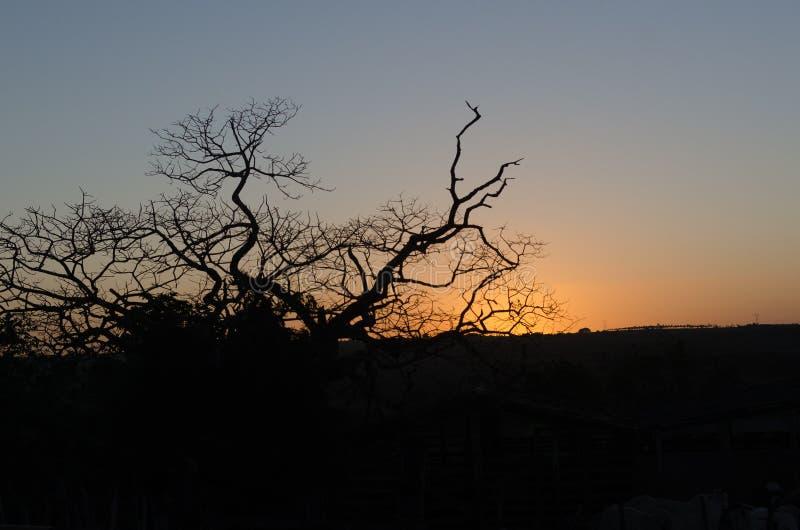 ветви дерева на сумраке дня стоковое фото rf