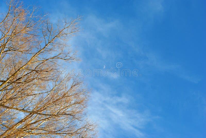 Ветви деревьев вербы без листьев на предпосылке облачного неба с малой луной стоковая фотография rf