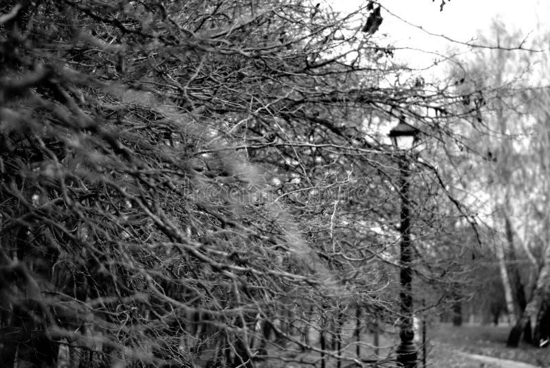 Ветви деревьев в парке стоковое фото rf