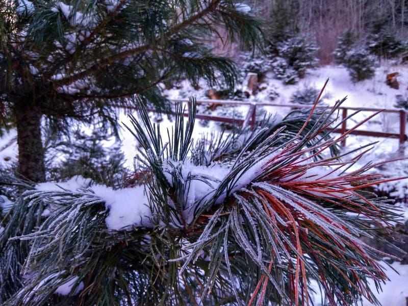 Ветви деревьев и кустов в изморози стоковые фото
