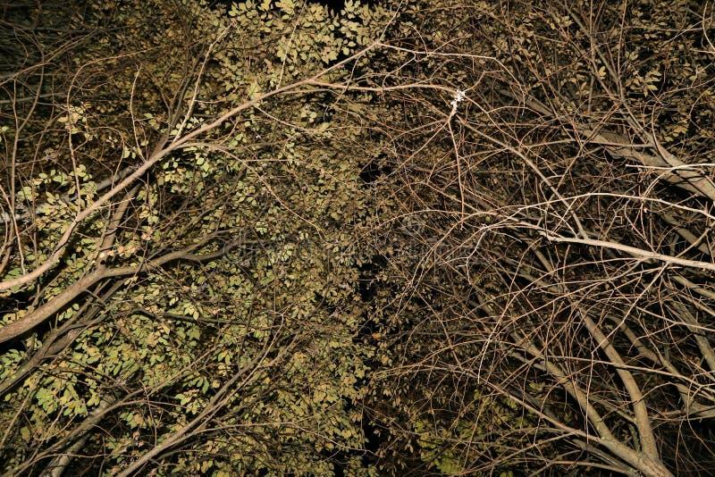 Ветви деревьев, текстура предпосылки конспекта природы листьев стоковые изображения rf
