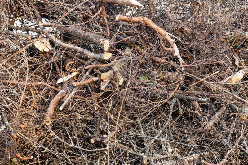 Ветви деревьев штабелированных в куче, предпосылке, текстуре стоковое фото