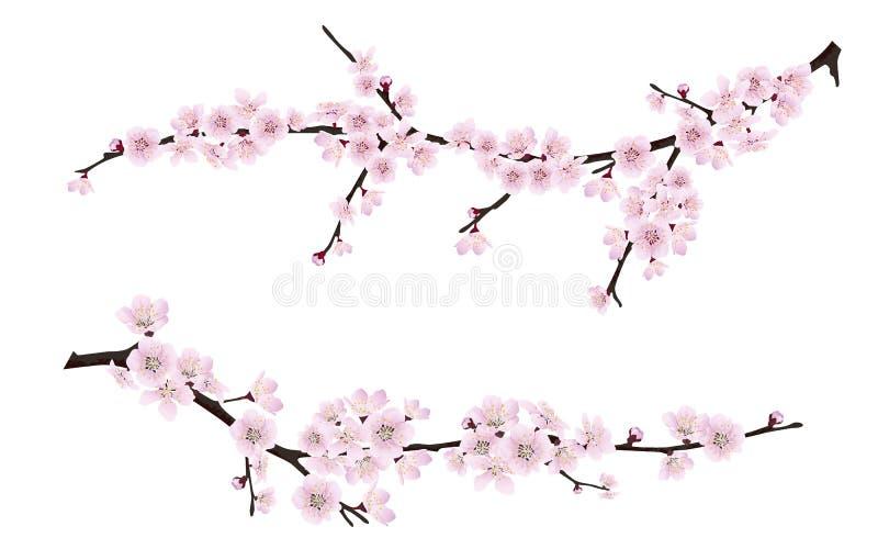 Ветви дерева весны зацветая с розовыми цветками бесплатная иллюстрация